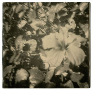 Marmaris, Turkey, pinhole photography, macro, cats, flowers, beach